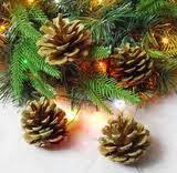 Natur och gröna juldekorationer